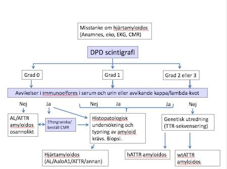 Utredningsalgoritm vid hjärtamyloidos