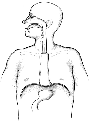 esofagus.jpg